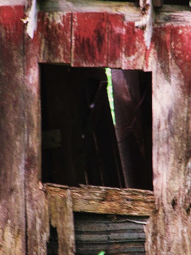 Window in the woods by CharlesRay2010
