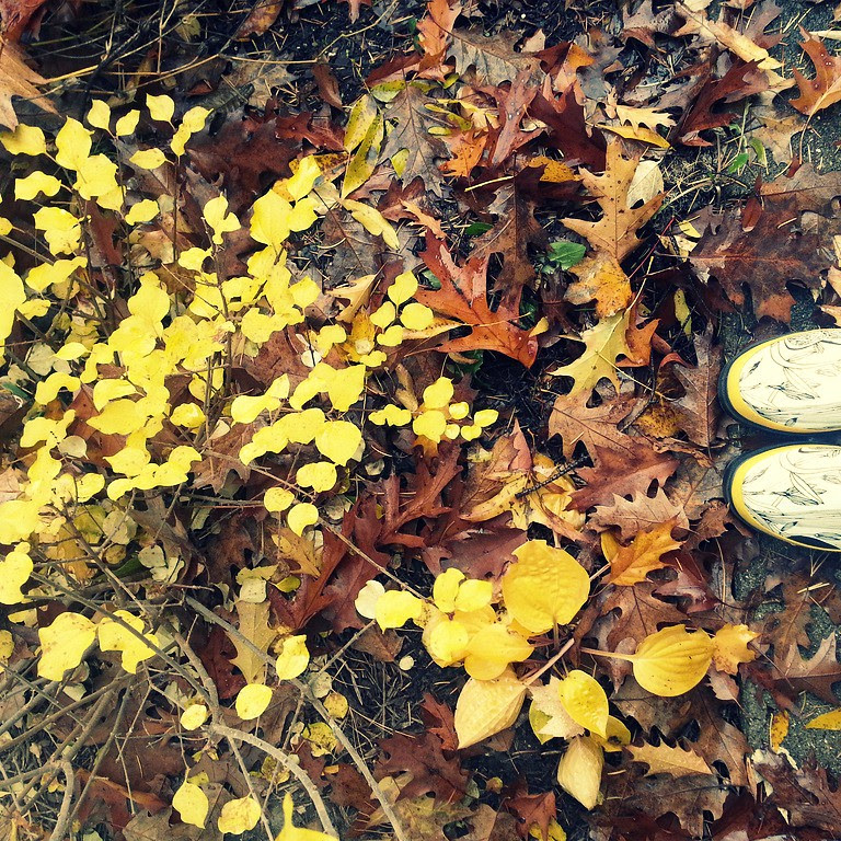 {aedm} day 4...autumn colors