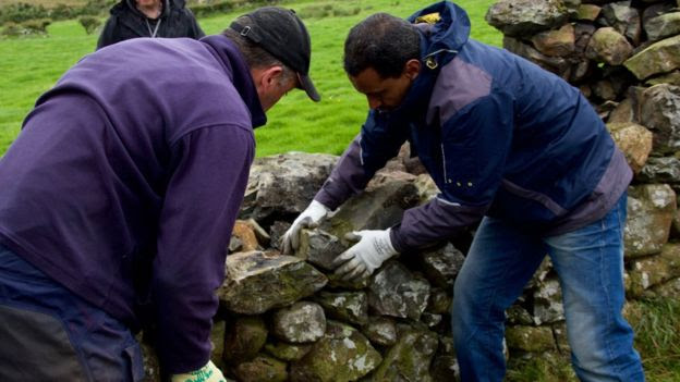 Volunteers working on a dry-stone wall in the Mournes