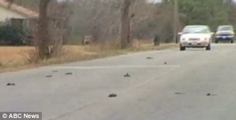 On the streets: Estimates put the dead bird count well into the thousands