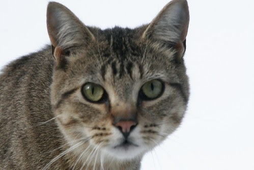 Kitten head clinic 4 makes him cum 3 times