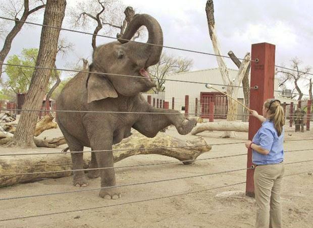 Eefanta asiática 'Rozie' vem fazendo aulas de pilates no zoológico de Albuquerque (Foto: Reprodução/Facebook/ABQ BioPark)