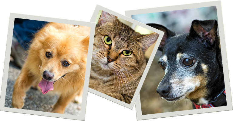 Small Dogs For Adoption San Antonio