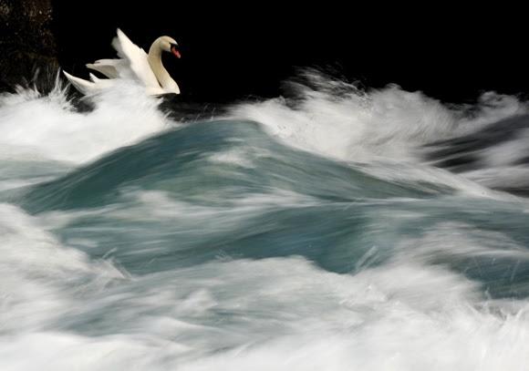Swan, da Macedónia