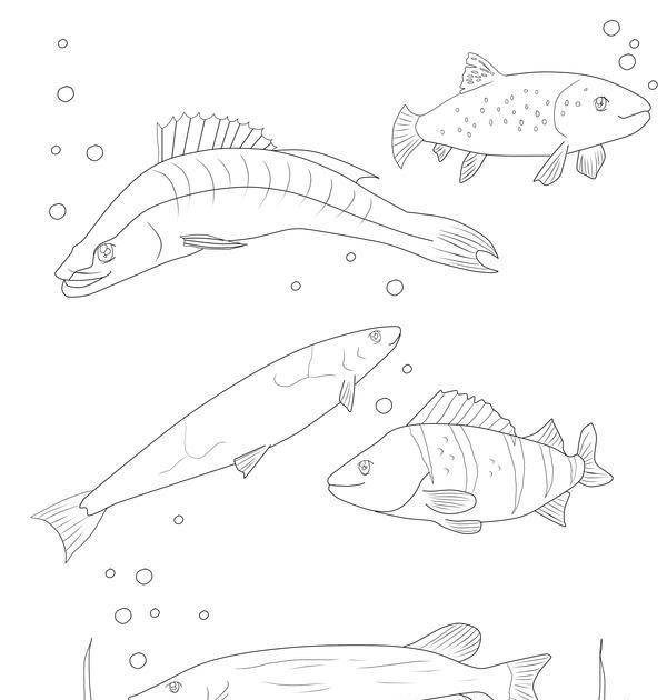 kinder malvorlagen fische  aiquruguay