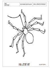örümcek Resmi Boyama