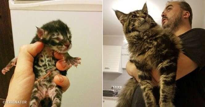 Gatos que não perceberam o quanto cresceram