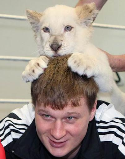 Alexander Povetkin lion