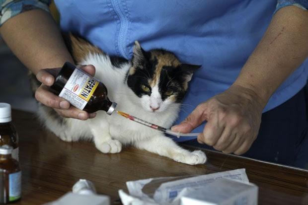 A enfermeira Maria Torero aplica medicamento em um de seus gatos; seus braços tem marcas de arranhões dos felinos (Foto: Martin Mejia/AP)