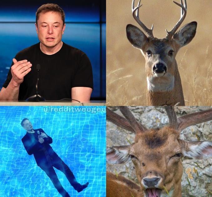 Deer Drowned In Pool Meme - apsgeyser