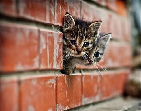 All in all it's just another cat in the wall