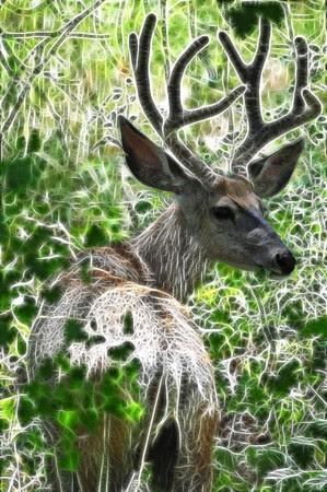 Fractal Buck