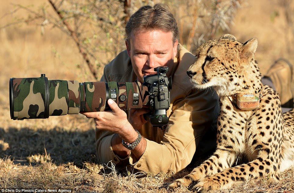 Photographer Chris Du Plessis and Mtombi the Cheetah reviewing the photos