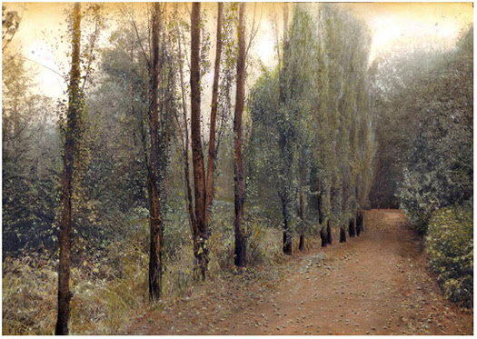 Barbara Kalhor - Hazelwood Trail