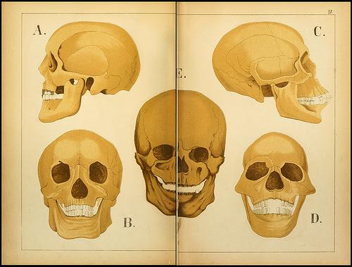atlas anatomie enfant 05 Atlas anatomique pour écoliers en 1879  information histoire design