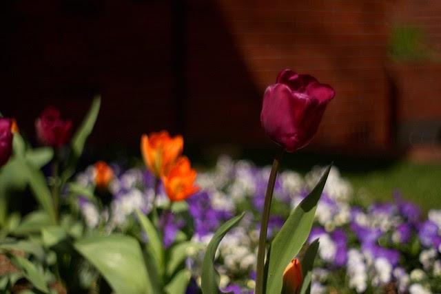 spring (purple)