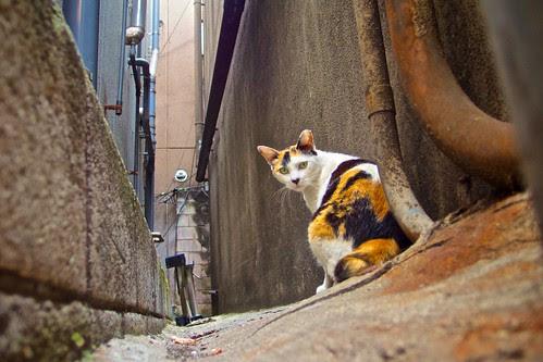 湯島路地裏猫