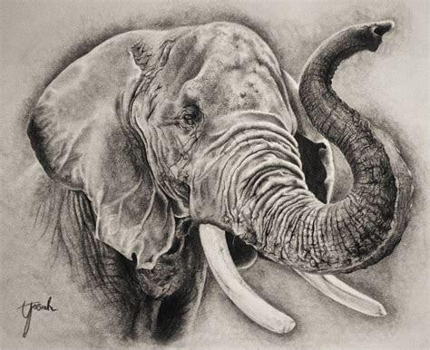 elephant head drawings google search elephant side