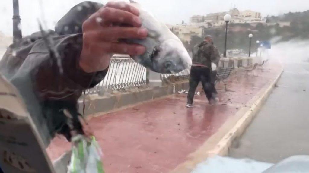 οι άνθρωποι συλλέγουν τα ψάρια που εκτοξεύονται από τη θάλασσα στη Μάλτα, οι άνθρωποι συλλέγουν τα ψάρια που εκτοξεύονται από τη θάλασσα στη Μάλτα βίντεο, οι άνθρωποι συλλέγουν τα ψάρια που εκδιώχθηκαν από τη θάλασσα στη Μάλτα εικόνα