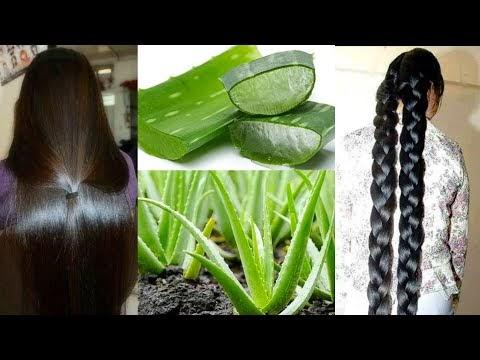 सुबह बाल धोने से पहले Aloevera इस तरह लगालो बाल इतने काले,घने,लंबे,सिल्क