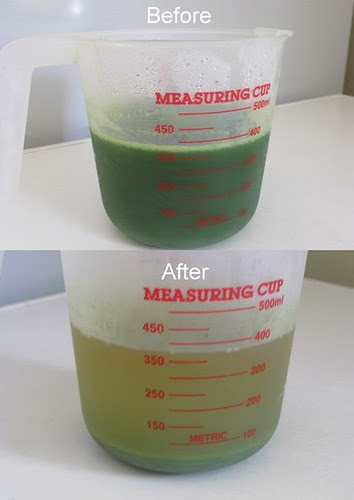 concentrated pandan 1