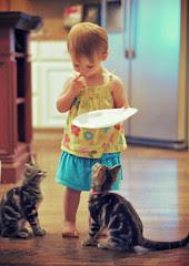 hungi kitties
