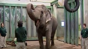 hi-lucy-elephant-852
