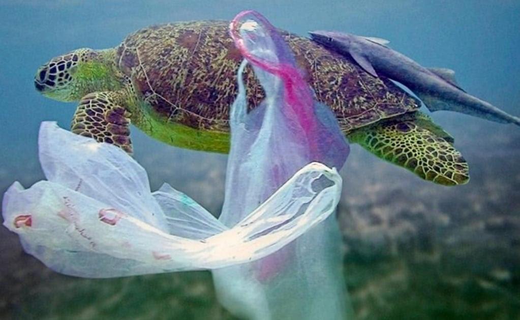 En el 2050 habrá más plástico que peces en el mar