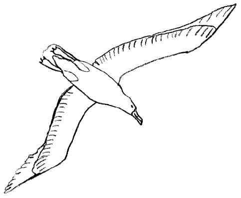 Comment Dessiner Un Oiseau Qui Vole Facile Lyccee Buron