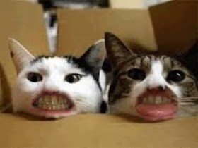 Kucing Lucu Bikin Ngakak