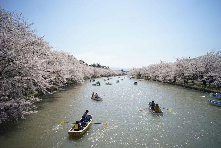 primavera-flores-cerezo-sakura-japon-national-geographic (15)