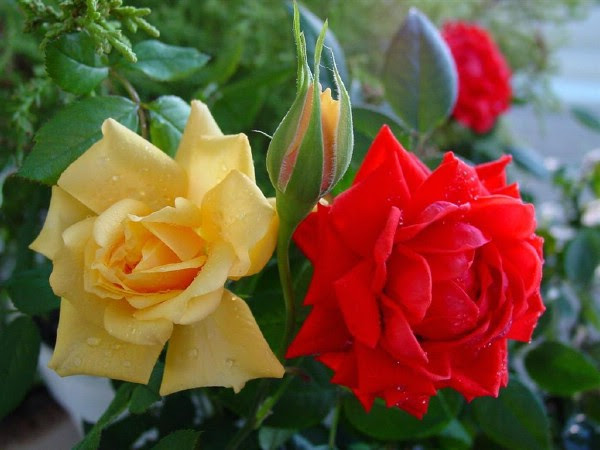 Colorful flower photos