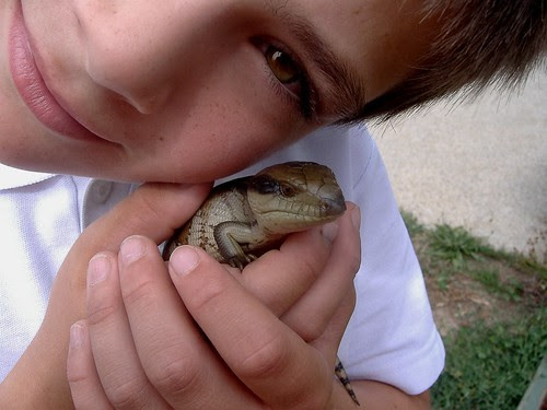 lizardy with sam