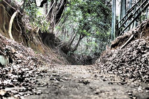 多摩丘陵散歩