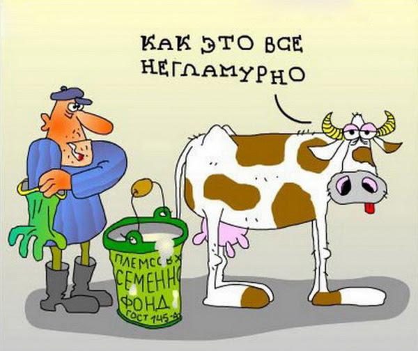 середине секции коровы и ветеринар стихи с картинкой чем носить