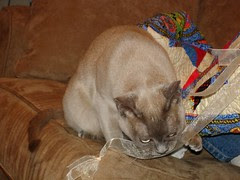 RB playing with the ribbon