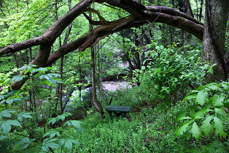 File:Seat-tree-forest-waterfall - West Virginia - ForestWander.jpg
