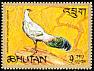 White Eared Pheasant Crossoptilon crossoptilon