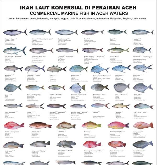 Nama Ikan Laut Di Malaysia Aneka Ikan Hias