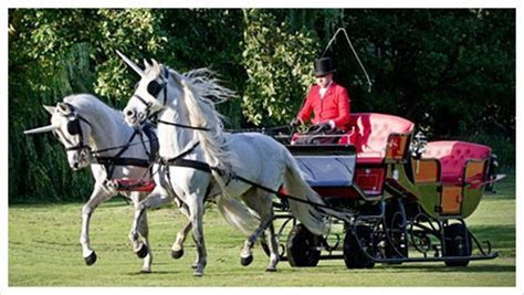 Unicorn Hire   Horse Drawn Carriages, UK