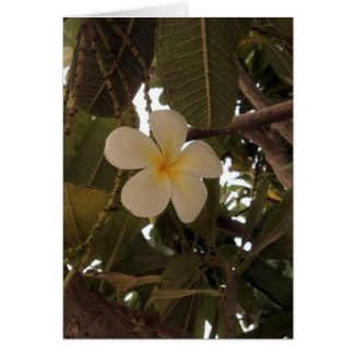 Single plumeria card