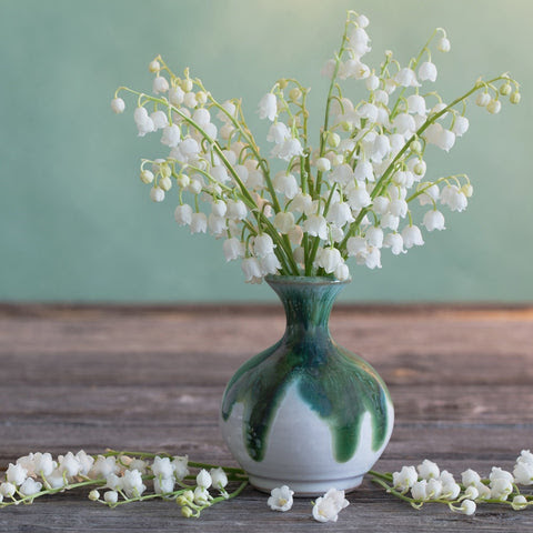 Lily Of The Valley Pips Easy To Grow Bulbs