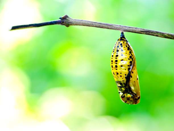 μεταμόρφωση αλλαγή πεταλούδα κάμπια