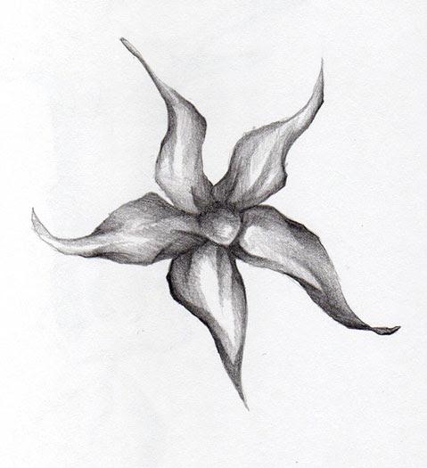 Iris Clip Art Library