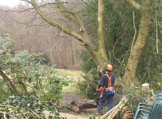 DSC_5724 tree felling