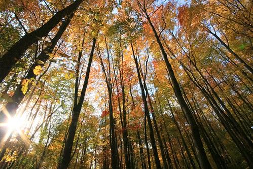 橡樹森林 Oak forest