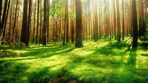 forest background forest background wallpaper