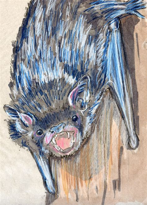 24 Hours: Silver haired Bat (Lasionycteris noctivagans)   The Daily Mammal