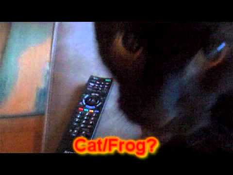 My cat sounds like Frog Cat