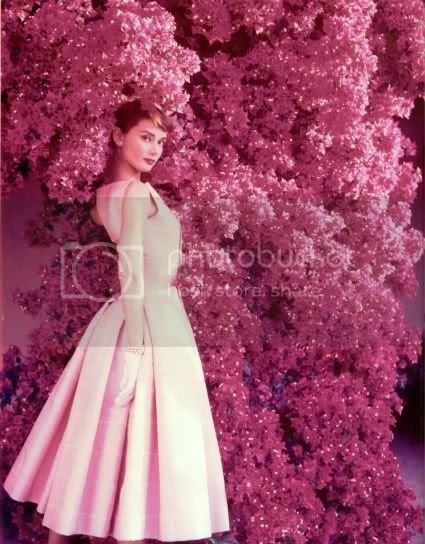 Audrey Hepburn Pictures, Images and Photos